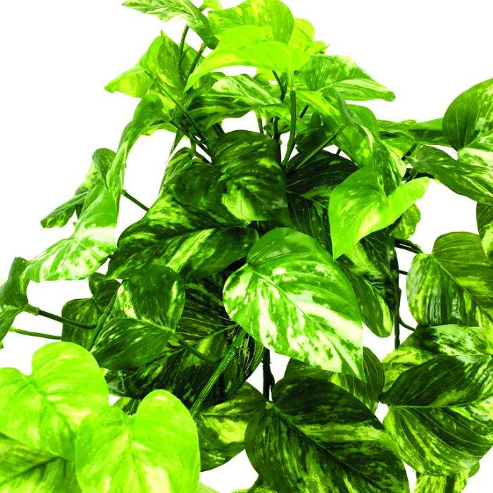 گیاهان گرینوال و دیوارسبز