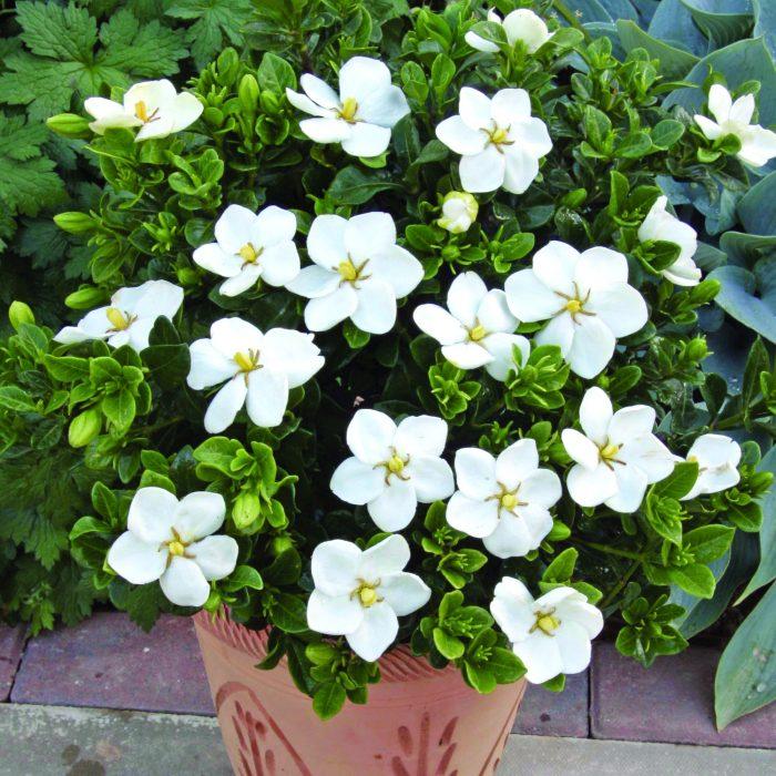 گیاهان فضای باز گرینوال دیوار سبز