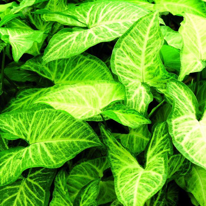 گیاهان گرینوال دیوار سبز